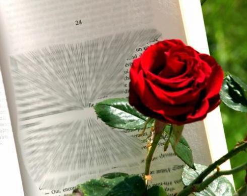 Une Rose, un livre pour la Sant Jordi (Photo La Gazette Catalane)