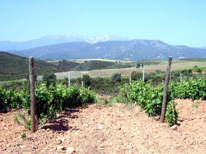 un terroir à l'accent rocailleux (Photo LOa Gazette Catalane ).jpg