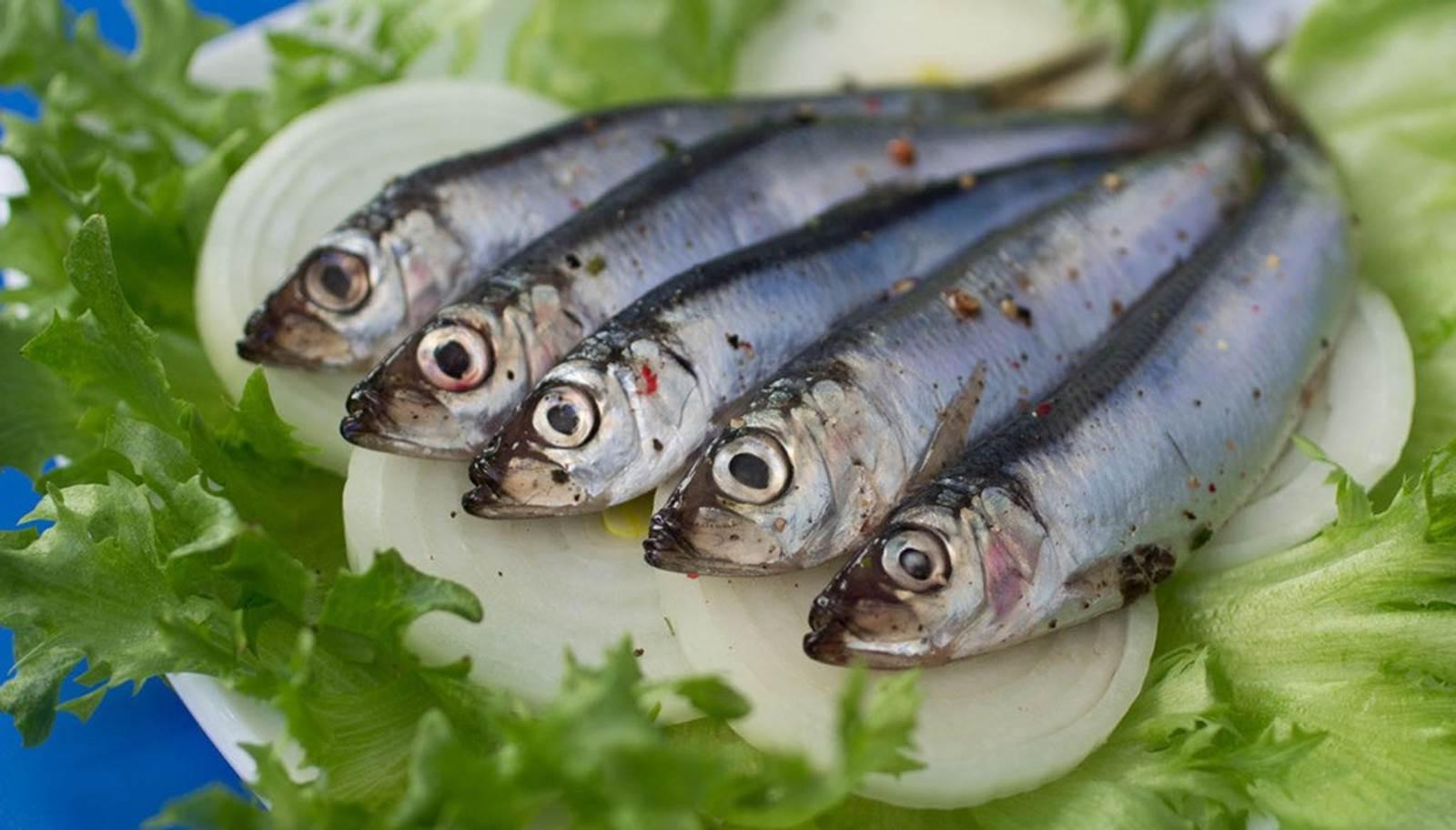 Du 02 au 04 Juin fête de l'anchois à Collioure (La Gazette Catalane)