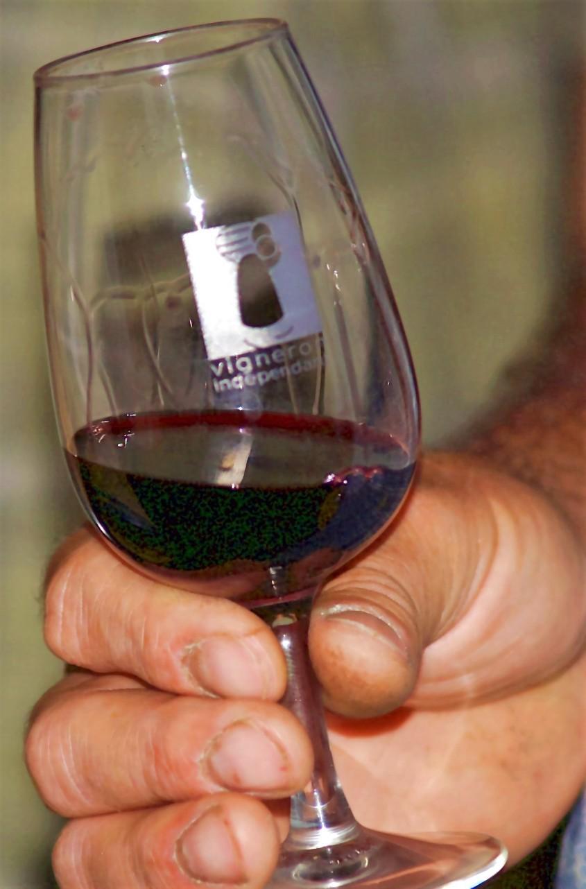 Dégustation des vins d'extrèmes qualités des vignerons de Tressère (Photo La Gazette Catalane).jpg